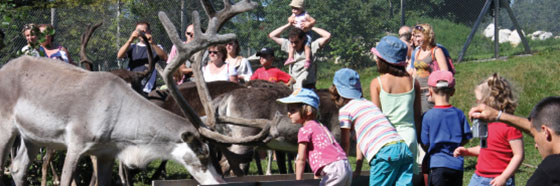 Rencontre avec les rennes - www.parcpolaire.com
