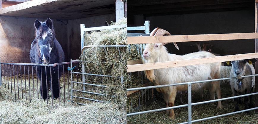 Image : L'accueil à l'entrée de la ferme