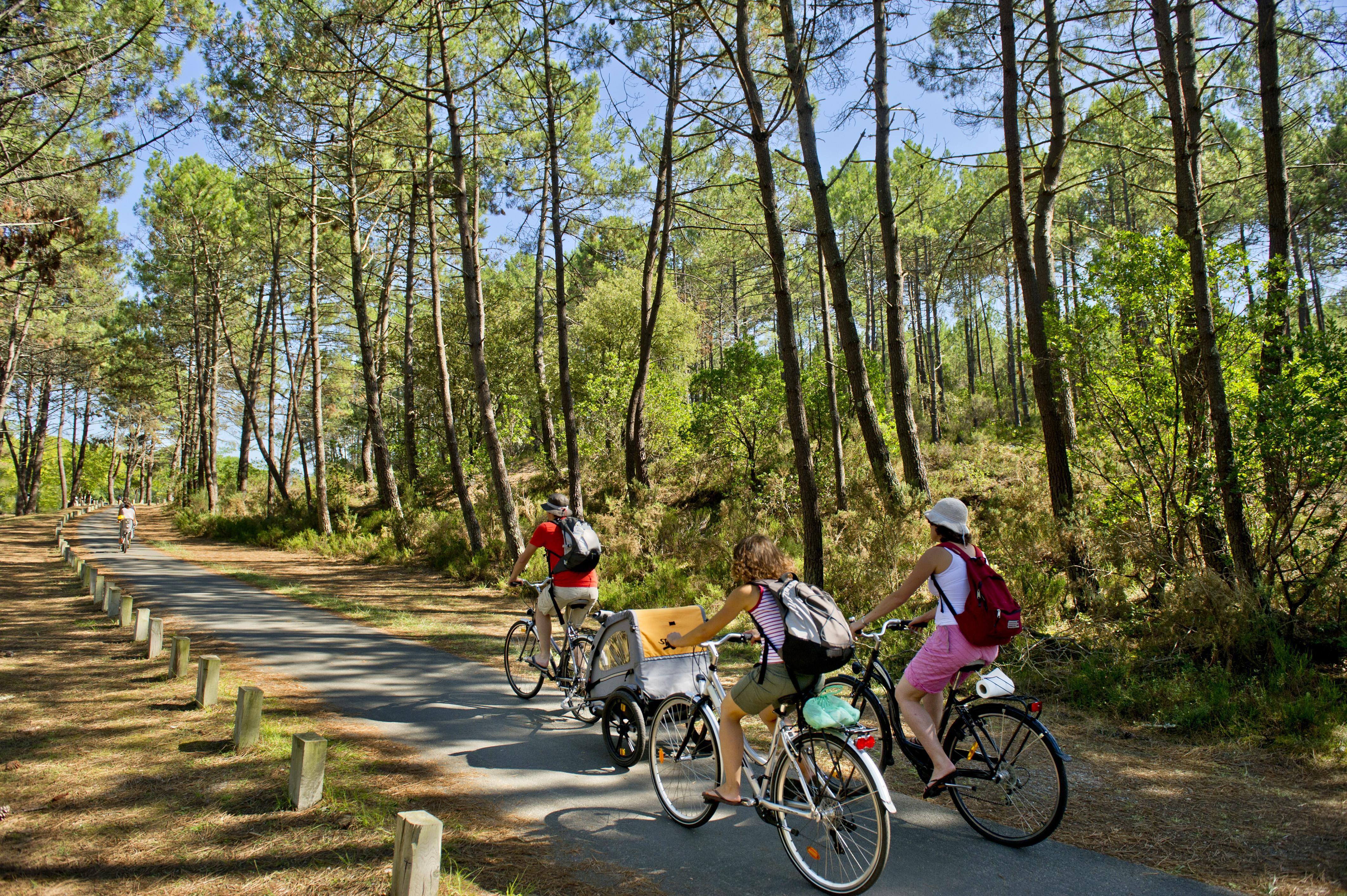 cyclistes dans les pins des landes